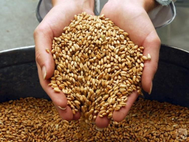 Азербайджан увеличил импорт пшеницы на 28%