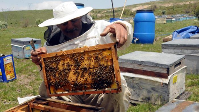 Турция и США готовы поддержать развитие пчеловодства в Азербайджане