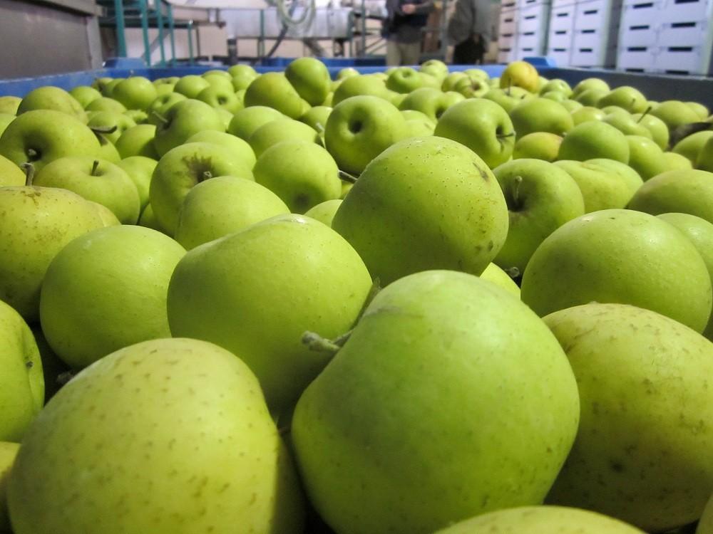 Азербайджан экспортировал в Россию яблоки на 35 млн долларов в 2018 году